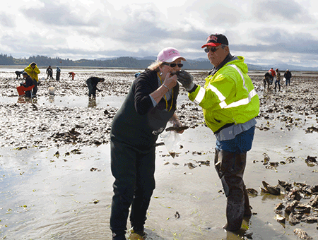 Oysterville Harvesting Willapa Bay