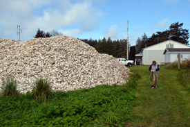 Oyster Shells Willapa Bay