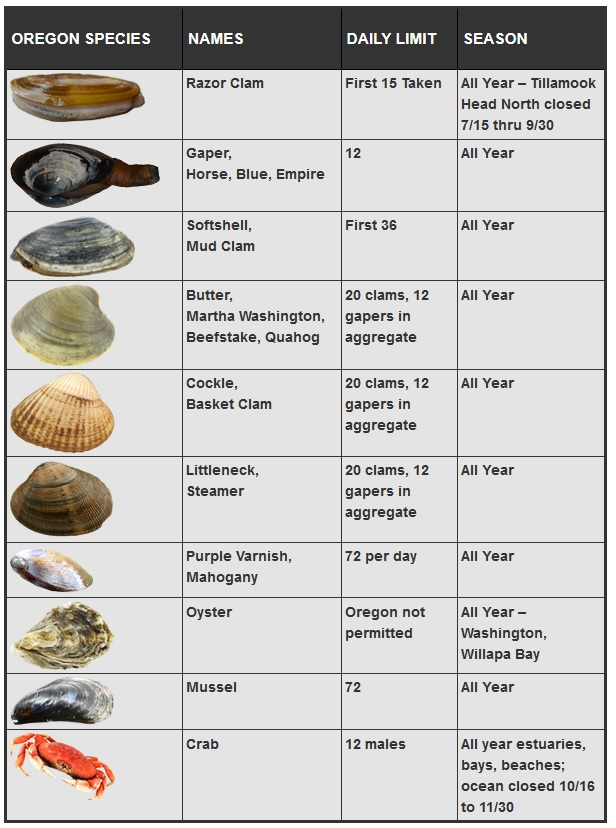 Shellfish License and Regulation