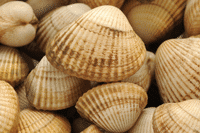 Cockles